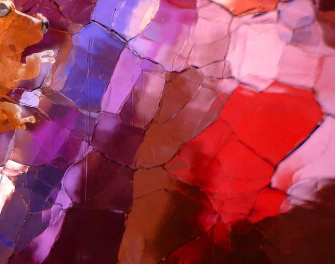 Frog color glass MGD©
